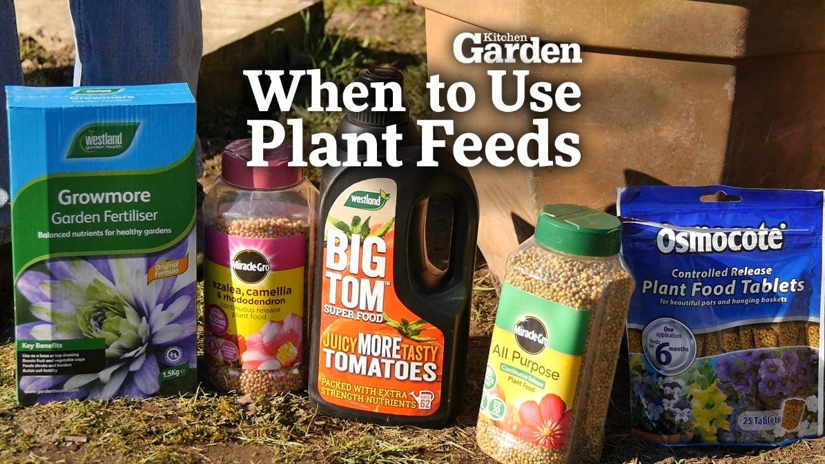 Kitchen Garden Food Drink Food